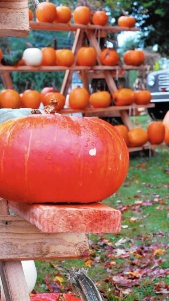 pumpkin-2-jpg-20151009