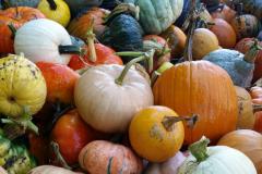 pumpkins in the trailer