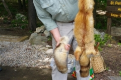 Steve Fish with fox pelt